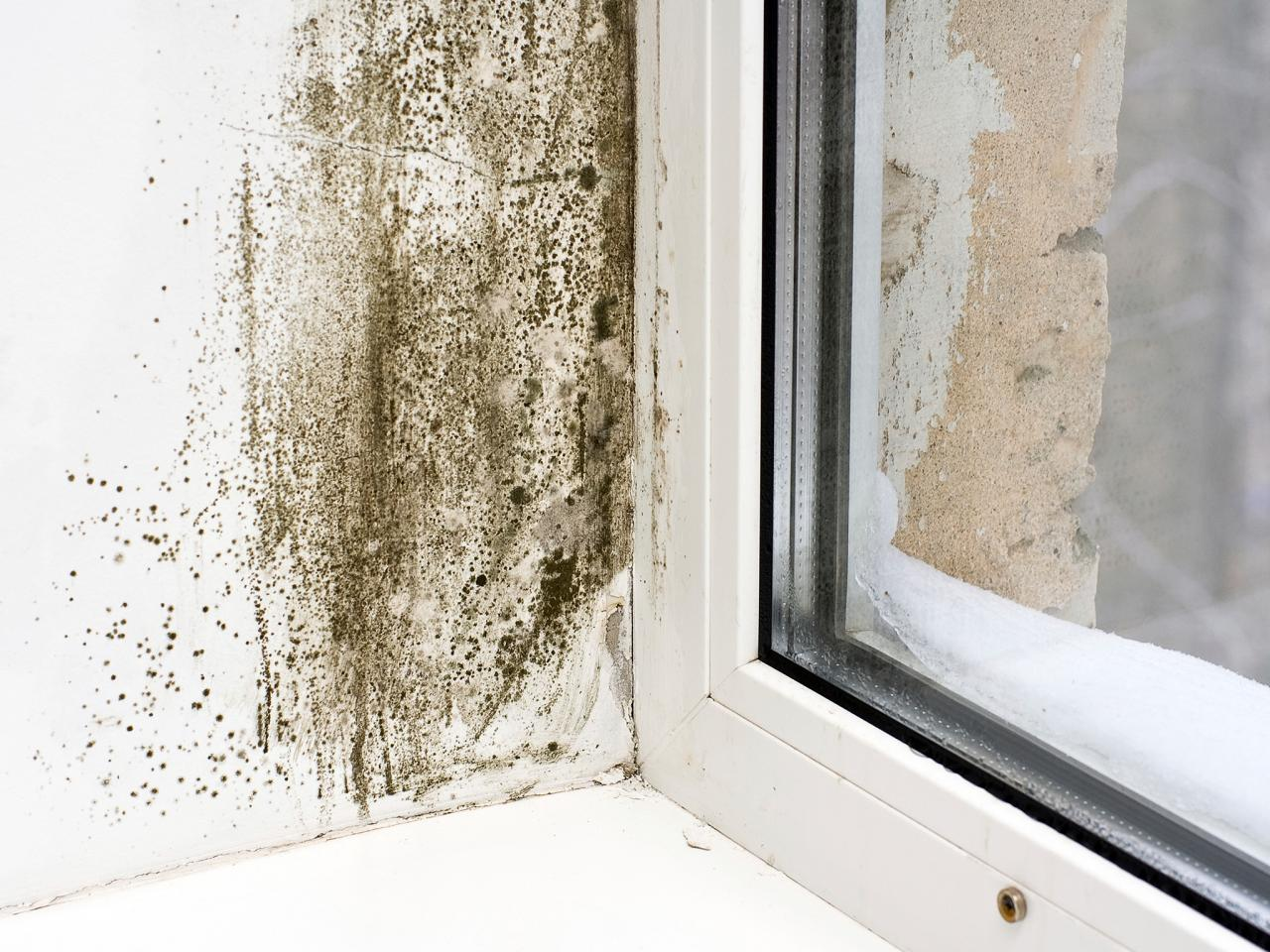 mold by window